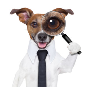 Private Investigator Contact Form